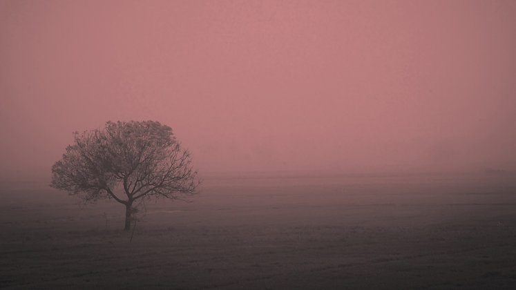 Nature's Colour, Yamuna Khadhar, Delhi, India