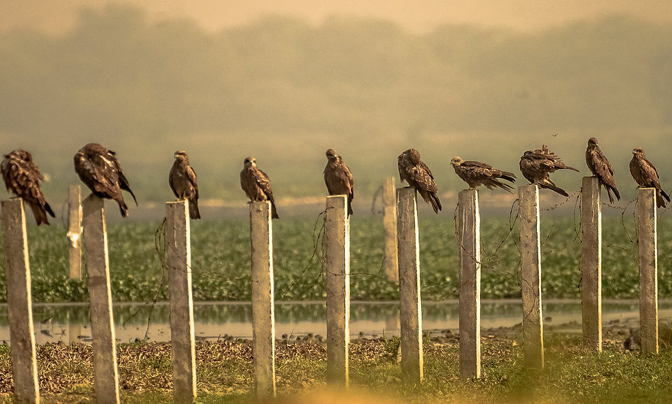 kc_birds_13