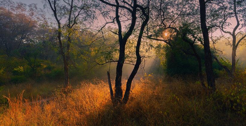 Morning Light at Sariska Wildlife, India