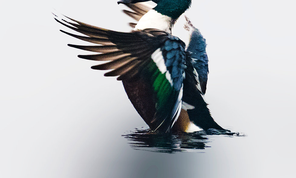 kc_birds_28