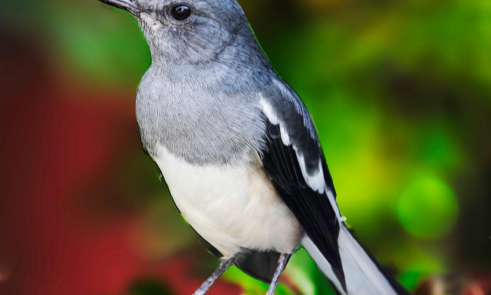 kc_birds_32
