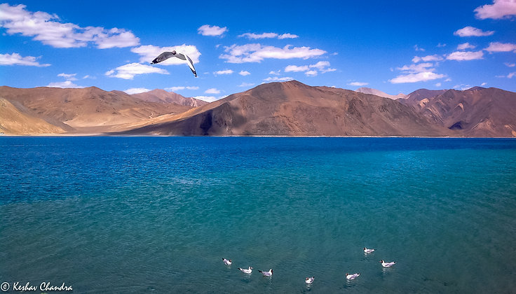 Bird Hovering Over The Pangong Lake, India
