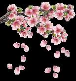 Spring-Free-PNG-Image.png