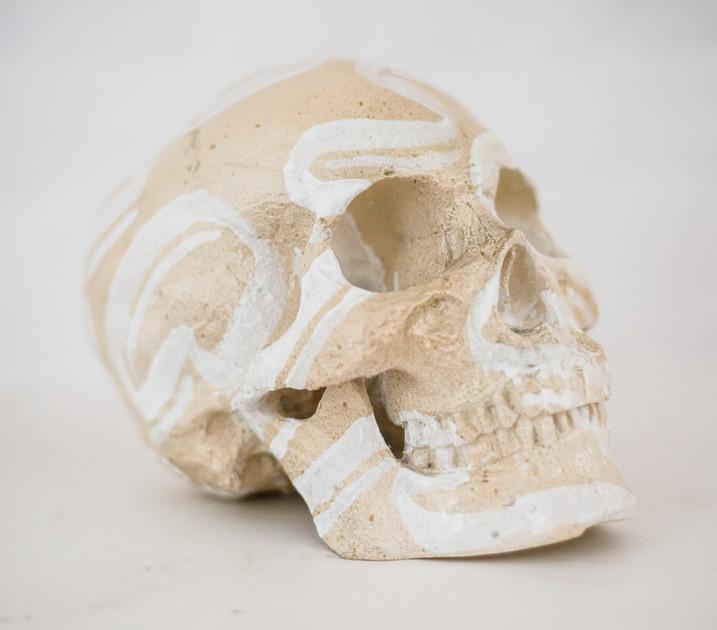 Skull - bone