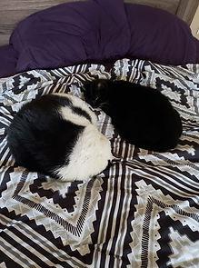 yin yang cats.jpg