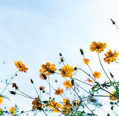 close shot of yellow flowers_edited.jpg