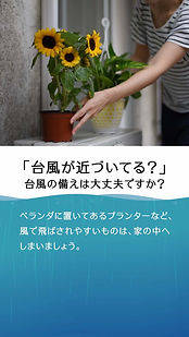 TiPS縦_台風.jpg