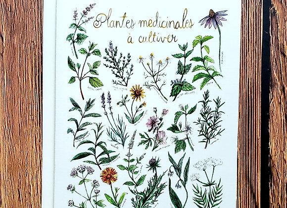 Plantes médicinales- Carte à souhaits - Mathilde Cinq Mars illustration