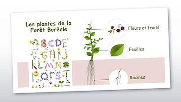 Les_plantes_de_la_forêt_boréale_-_JUIN