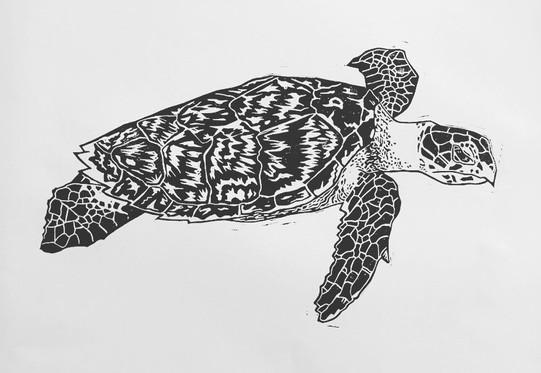 turtle print.jpg