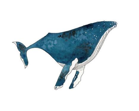 whale illustration.jpg