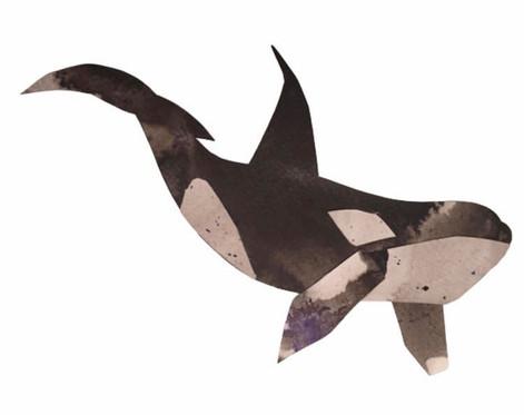 Orca whale.jpg