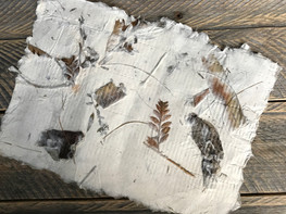 Hand- Collected Birch Inclusions