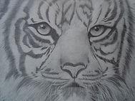 TIGER by Sherri Weeks