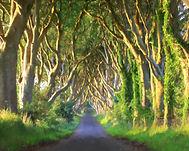 Narrow Path by Sherri Weeks