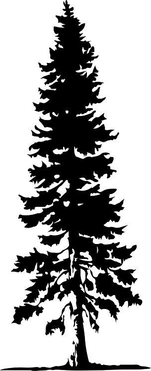COGZ - Fir Tree