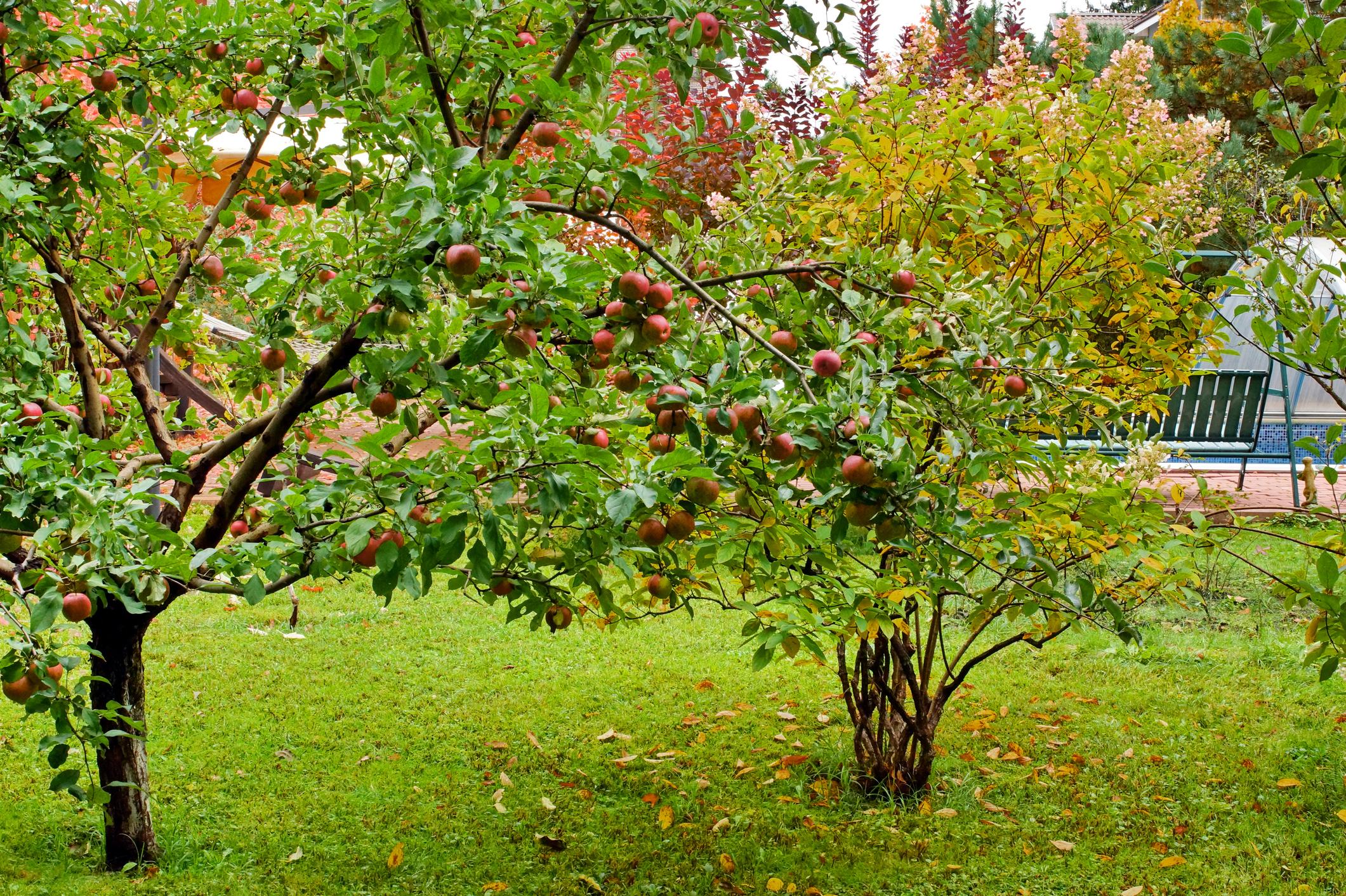 Braffort Jardins Fruitiers