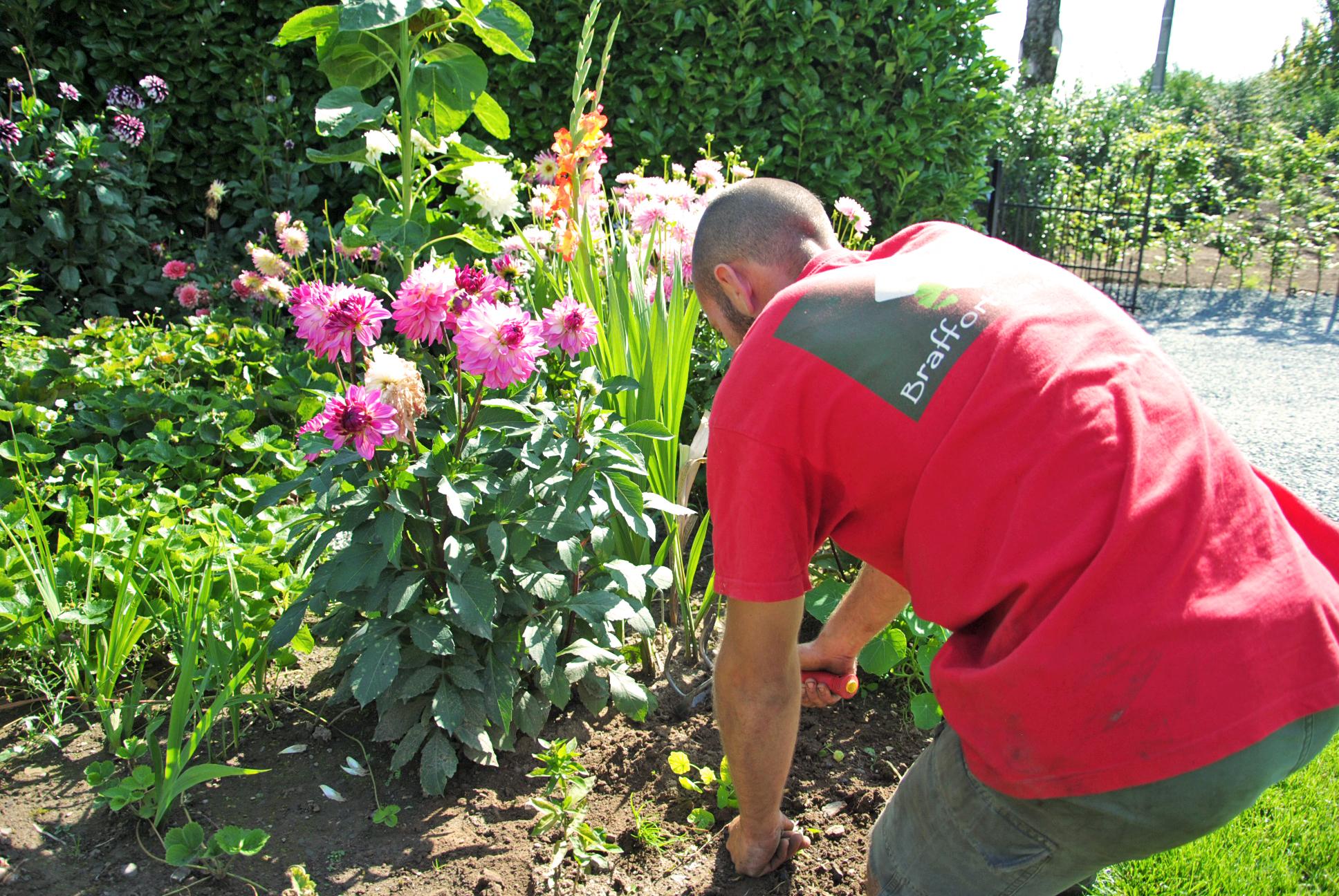 Braffort Jardins Plantations