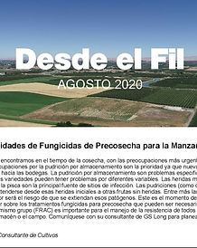 August Spanish Newsletter small.jpg