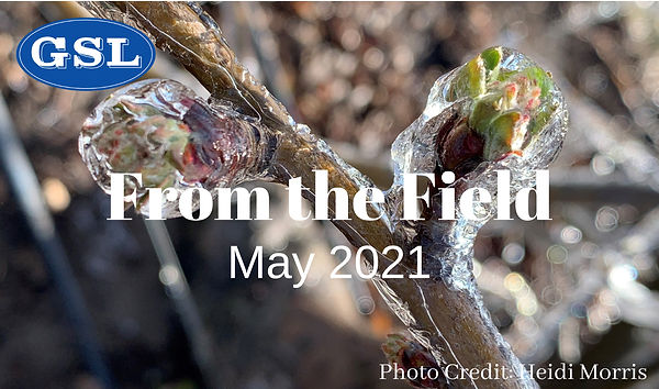 May Newsletter 2021-ENG.jpg
