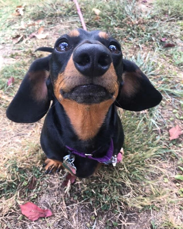 Yes, I would love a treat!.jpg