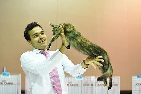 TICA judging cat show