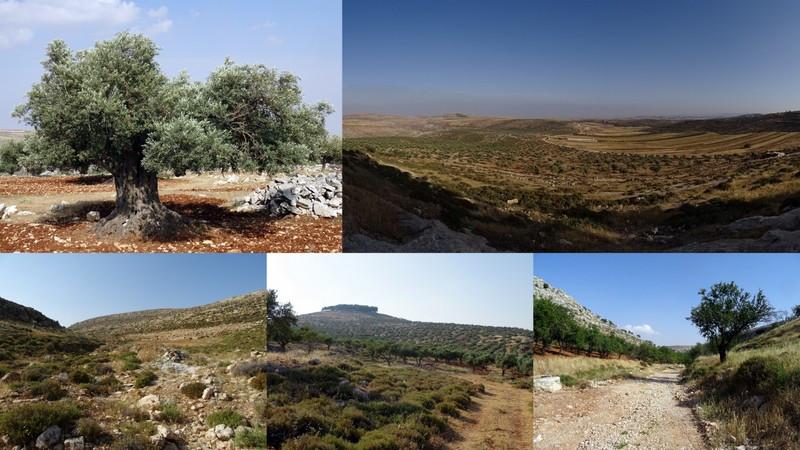 Hiking in Palestine