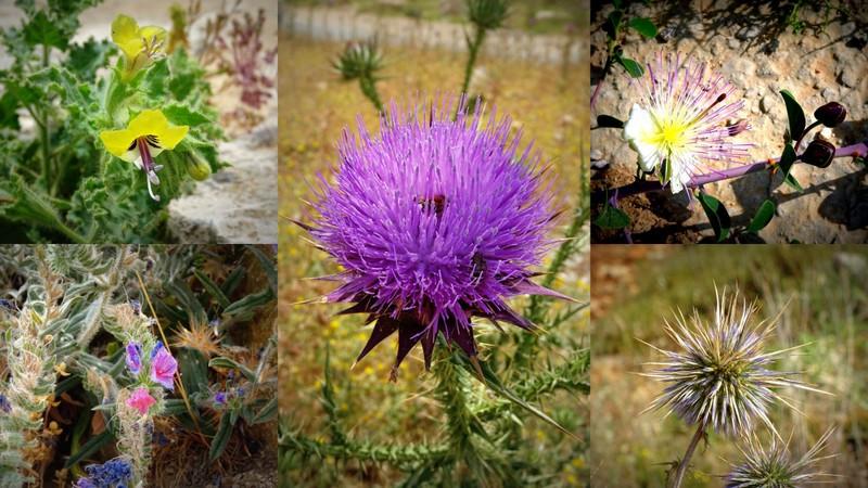 Flowers of Palestine
