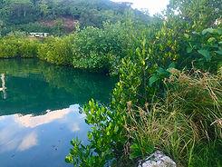Mangrove-Moorea-Haapiti-2018.jpg