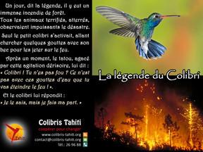 Focus association : Colibris Tahiti