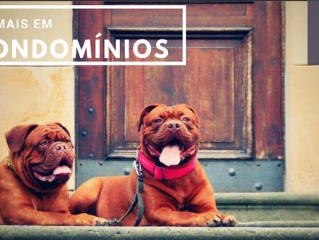 Animais em Condomínios: Quais são as regras?