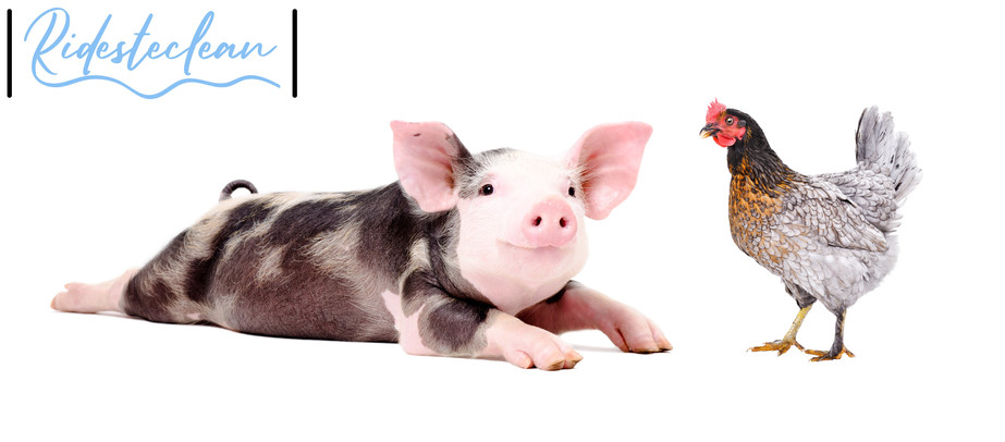 Ridesteclean Animal Health.jpg
