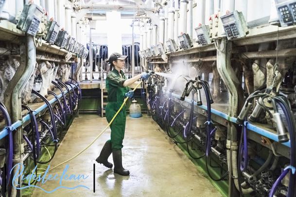 Ridesteclean Dairy CIP process.jpg