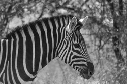 SOUTH AFRICA TRIP 20180471