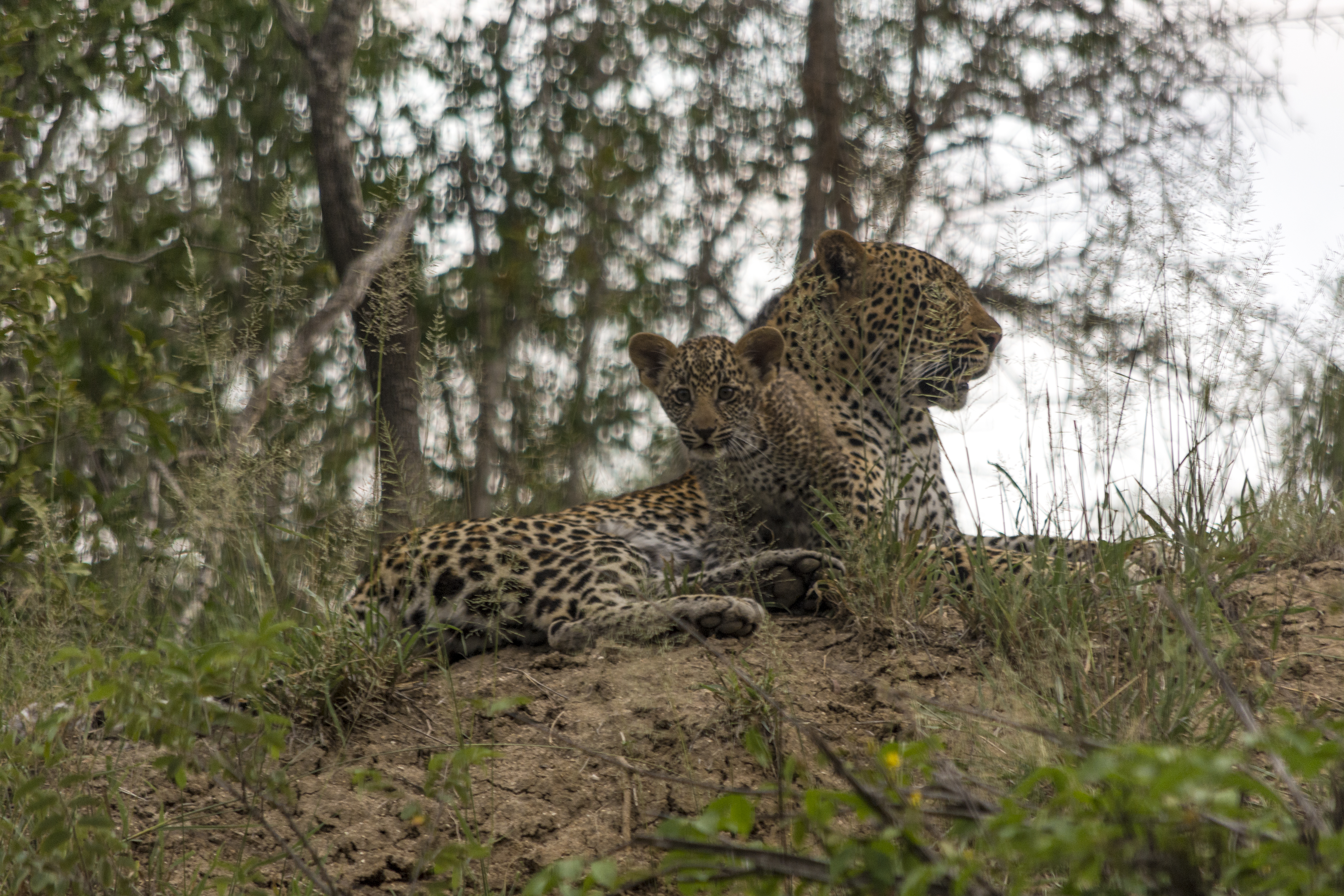 SOUTH AFRICA TRIP 20180437