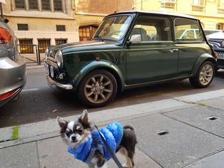 Como é ter um Cachorro em Paris