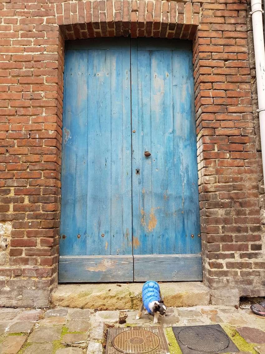 Cachorro em frente ao portao