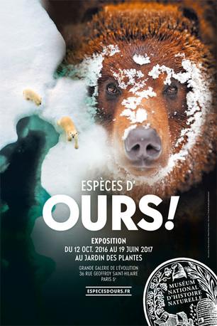 Exposição sobre Ursos no Museu de História Natural