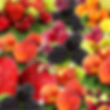 agriculturelogo.siel.jpg