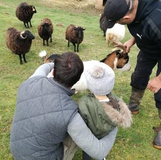 Enfant et moutons Ouessant