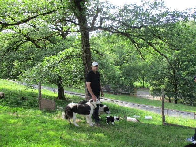 Jean-Marc et ses chiens