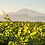 Thumbnail: AOP Côtes-du-Rhône Blanc 2019 BIO