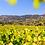 Thumbnail: AOP Côtes de Provence Rosé 2020 BIO