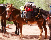 Mules carrying goods through the trail i