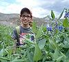 Flowers (1024x768).jpg