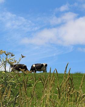 meadow-2503453_1920.jpg