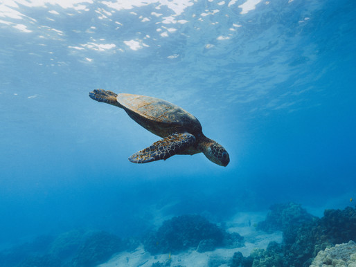 3 Amazing Spots to Snorkel Off the Shore in Maui