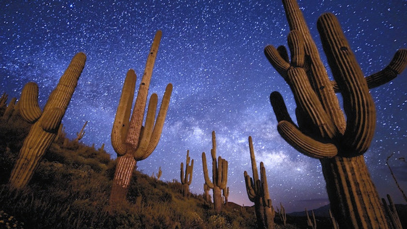 Saguaro cacti under the stars.jpg
