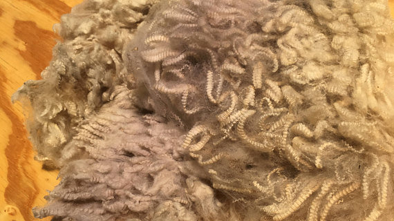Desert Cloud Debouillet Unwashed Wool Fleece