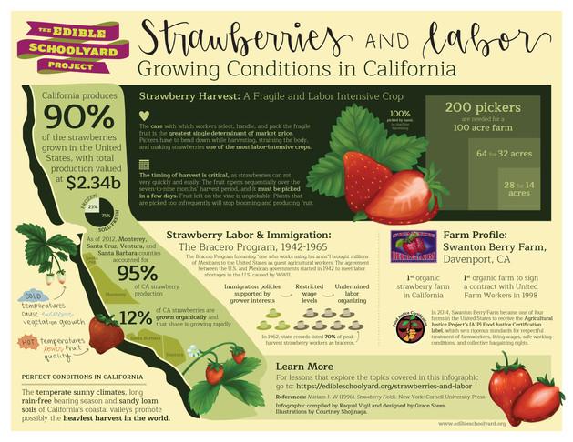 Edible Schoolyard Project - Strawberries